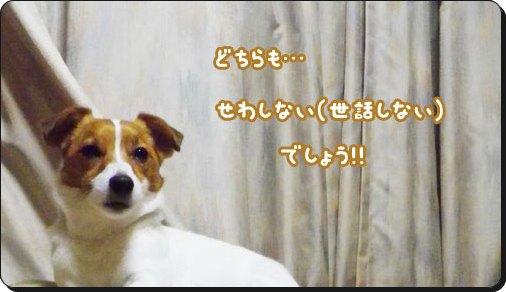f0129214_15495014.jpg