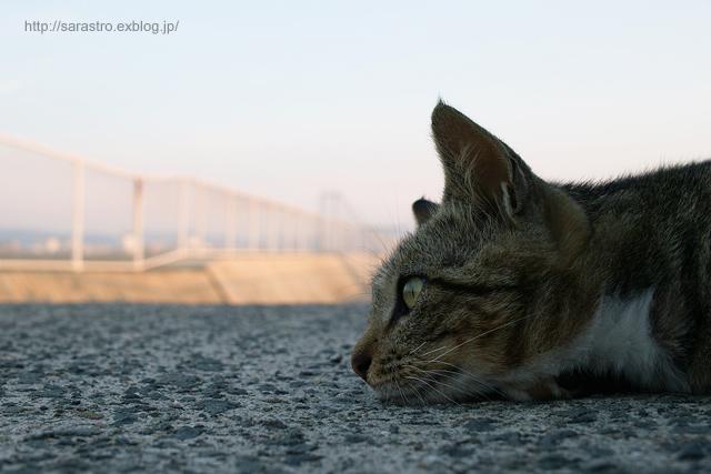 ノラ猫_e0028416_059327.jpg