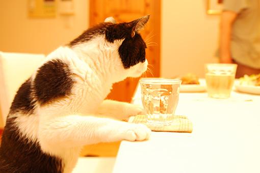 昼酒@しまねこ印♪ヨタビ&夜酒フィナーレ!_b0259218_1115964.jpg