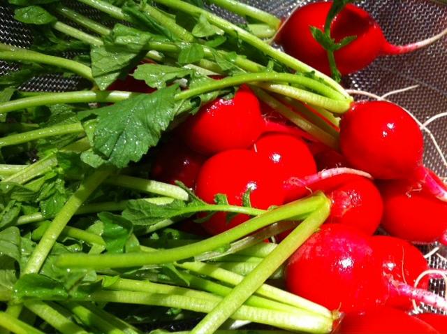 北海道八雲の農家さん、野菜がピンチ!&7月18日(木)のランチメニュー_d0243849_031985.jpg