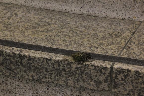 阪急梅田駅の階段・・・夏_d0202264_551550.jpg