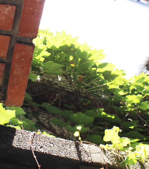 『スズメバチの巣?』_f0192906_23405522.jpg