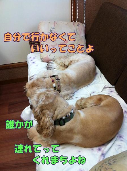 b0067012_16351132.jpg