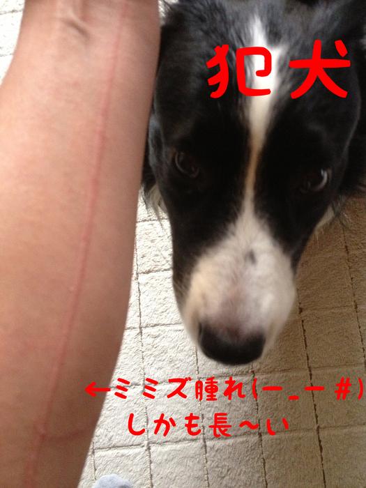 b0215315_1329219.jpg