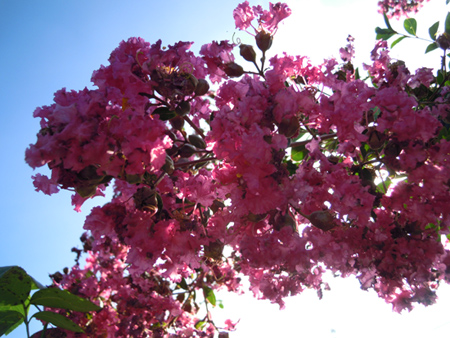 朝、庭で_e0097534_18112733.jpg