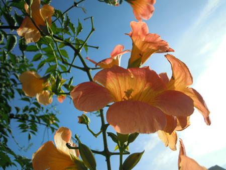 朝、庭で_e0097534_18113936.jpg