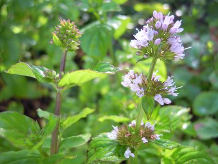 朝、庭で_e0097534_18125618.jpg