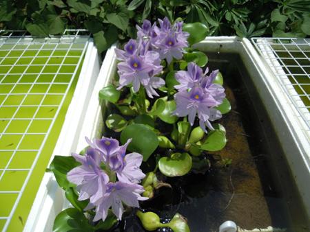 朝、庭で_e0097534_18314859.jpg