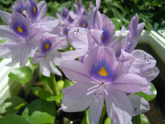 朝、庭で_e0097534_18315537.jpg