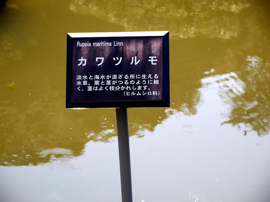 温山荘園_b0093754_2216617.jpg