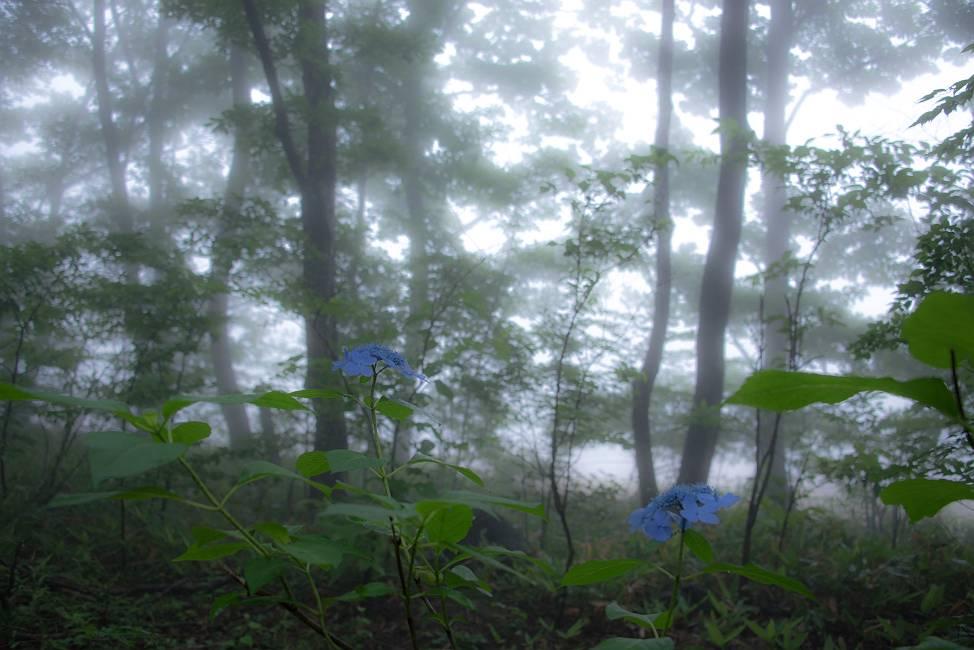 霧の中のデュエット_e0271864_22223593.jpg