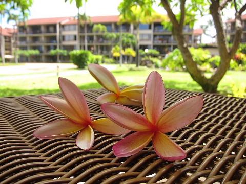 ハワイ・マウイ島、カメラウォーキング。_b0141773_0302087.jpg