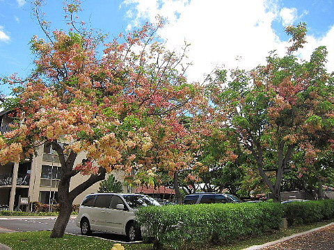 ハワイ・マウイ島、カメラウォーキング。_b0141773_0305127.jpg