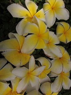 ハワイ・マウイ島、カメラウォーキング。_b0141773_030526.jpg