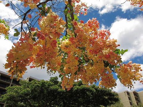 ハワイ・マウイ島、カメラウォーキング。_b0141773_031886.jpg