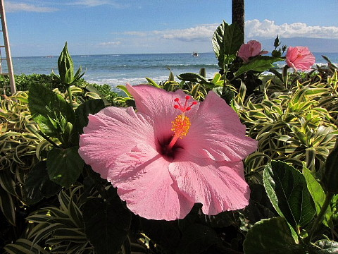 ハワイ・マウイ島、カメラウォーキング。_b0141773_032249.jpg