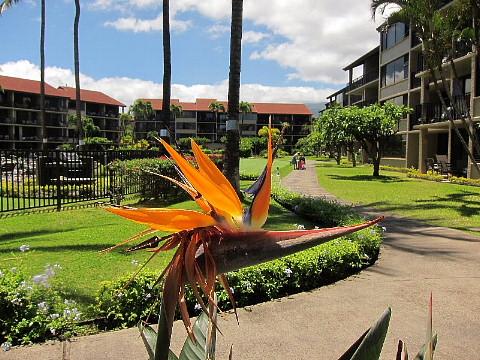 ハワイ・マウイ島、カメラウォーキング。_b0141773_032671.jpg
