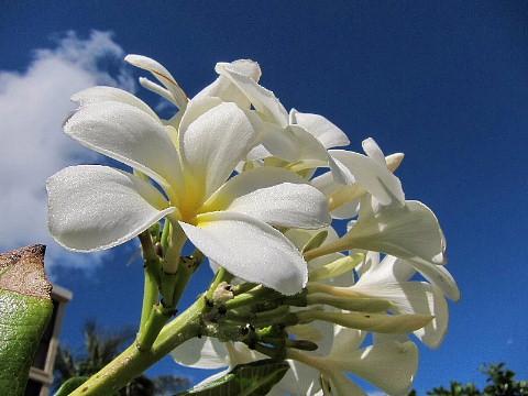 ハワイ・マウイ島、カメラウォーキング。_b0141773_0445589.jpg