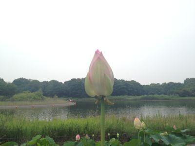 夏ニガテ_e0239908_18372146.jpg