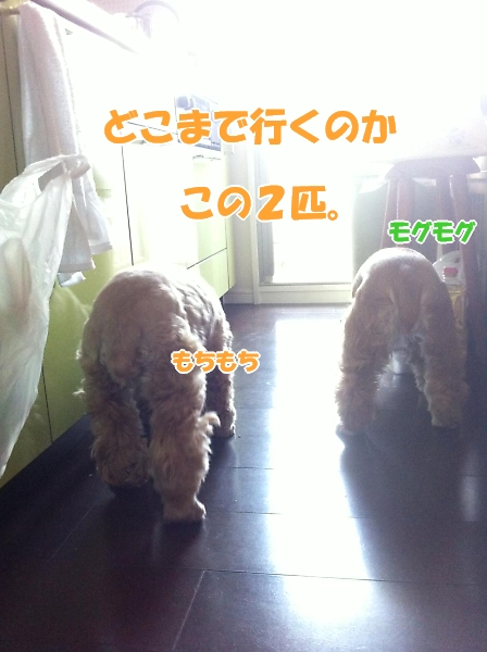 b0067012_23572079.jpg