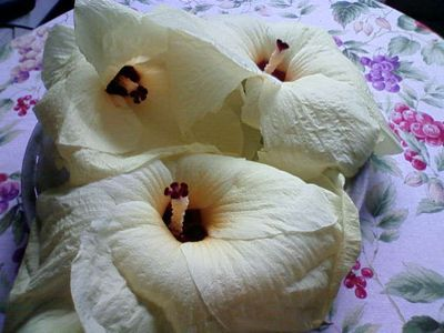 花オクラ_c0060919_1926425.jpg