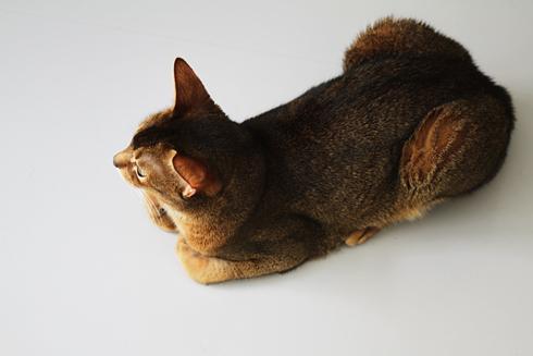 [猫的]記念日_e0090124_23454433.jpg