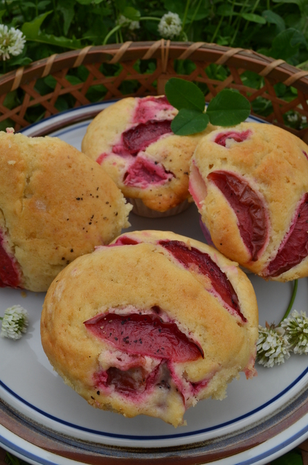 plum muffin!_b0207642_16354737.jpg