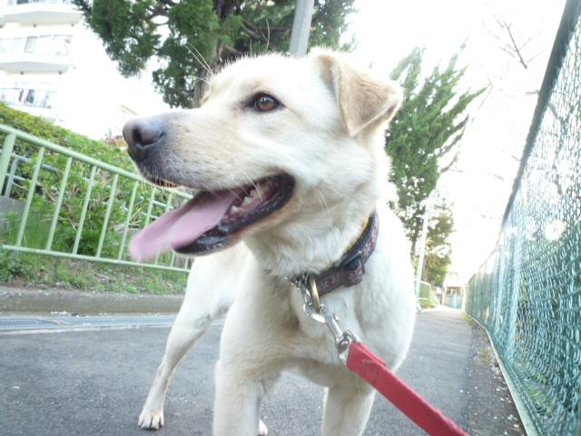 保護犬 健太!_a0267851_22423788.jpg