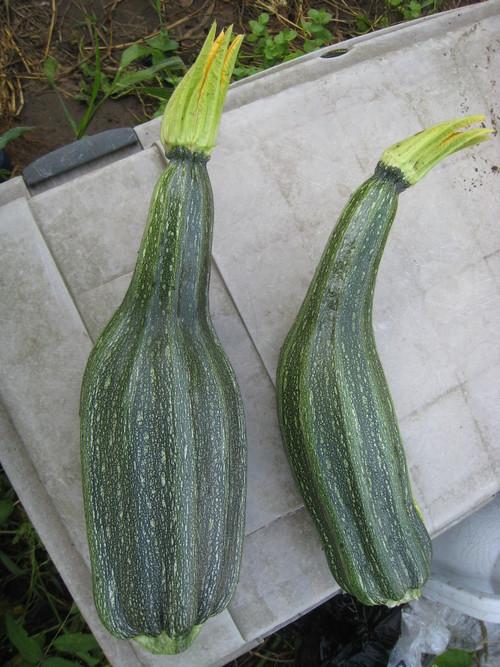収穫物あれこれ_e0121558_21515062.jpg
