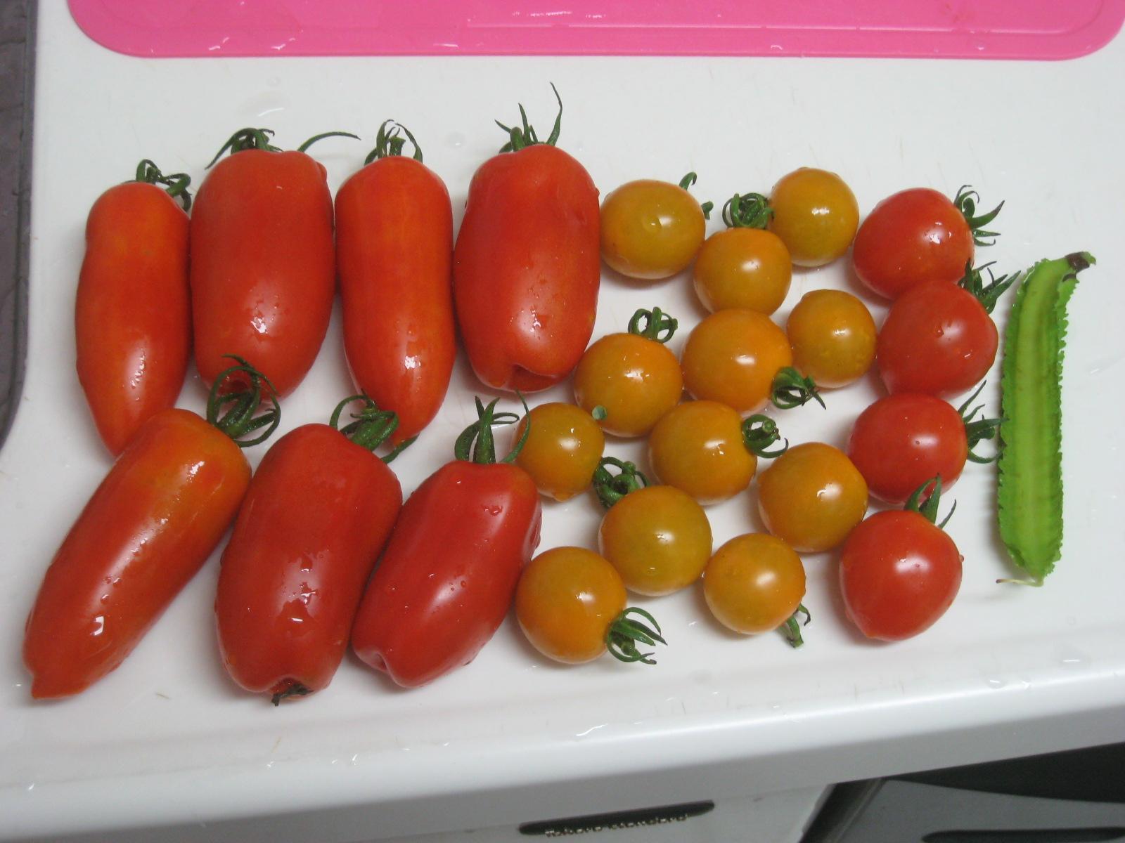 収穫物あれこれ_e0121558_21515764.jpg
