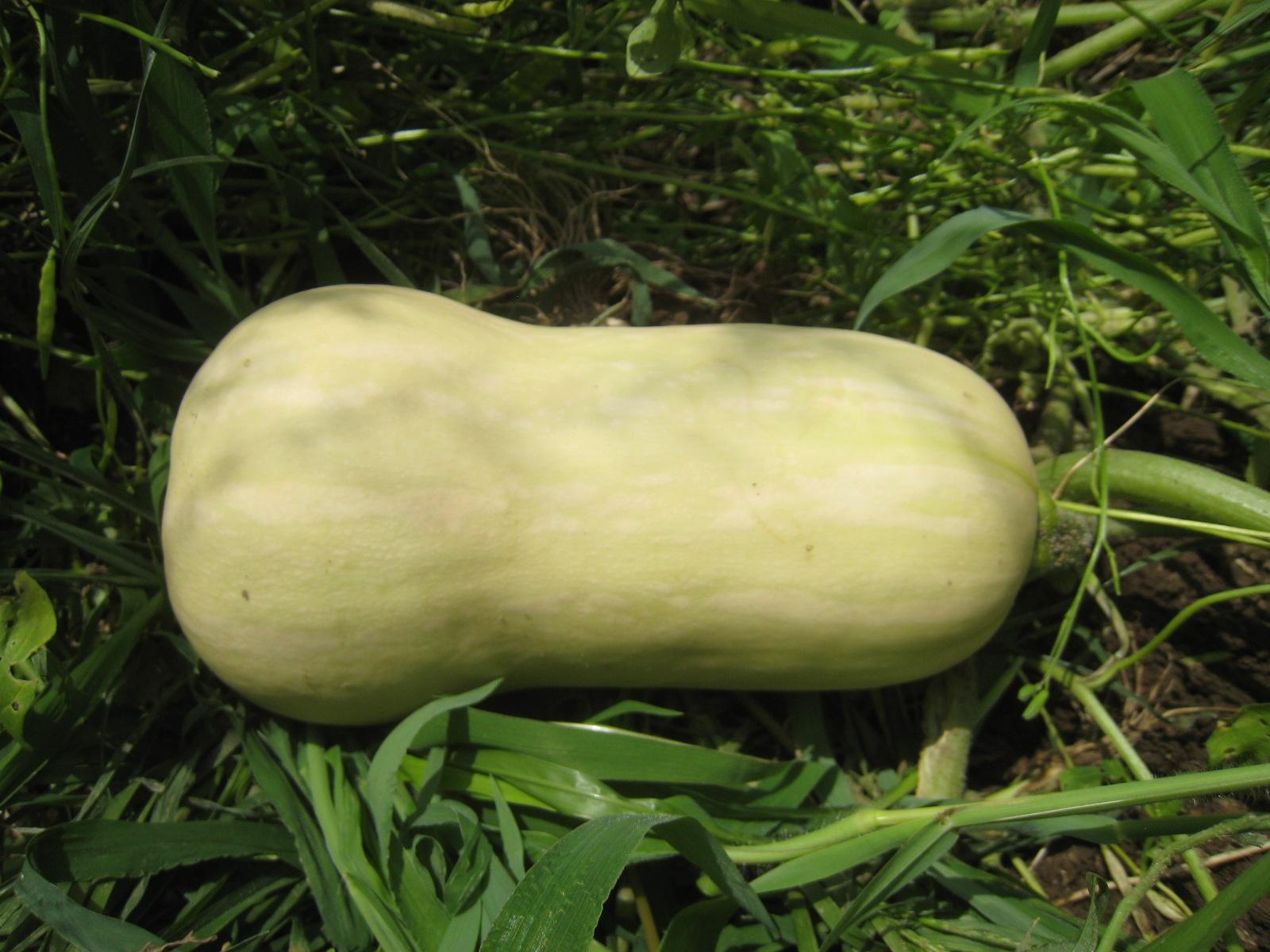 収穫物あれこれ_e0121558_21525044.jpg