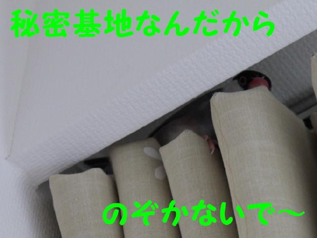 b0158061_20265588.jpg