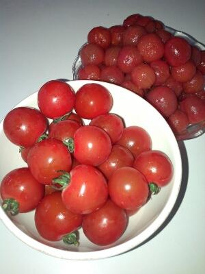 「よいっちゃん」というトマト。_d0237177_9112823.jpg