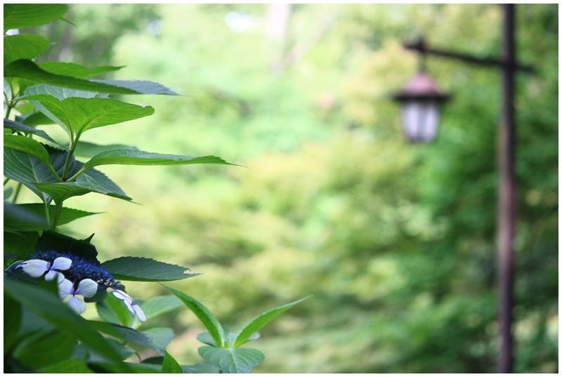 街灯のある風景205 in吉祥寺_d0151003_229556.jpg