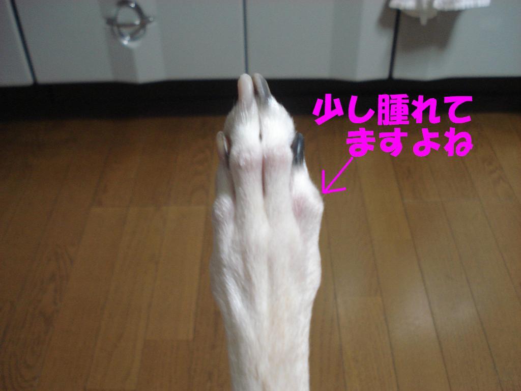 b0118209_0234977.jpg