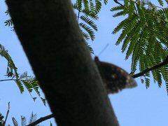 北杜24景フットパス「オオムラサキの里ウォーク」_f0019247_15463121.jpg