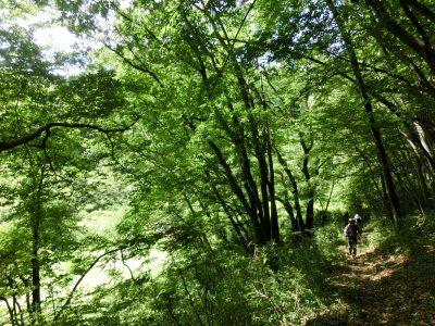 北杜24景フットパス「オオムラサキの里ウォーク」_f0019247_15512978.jpg