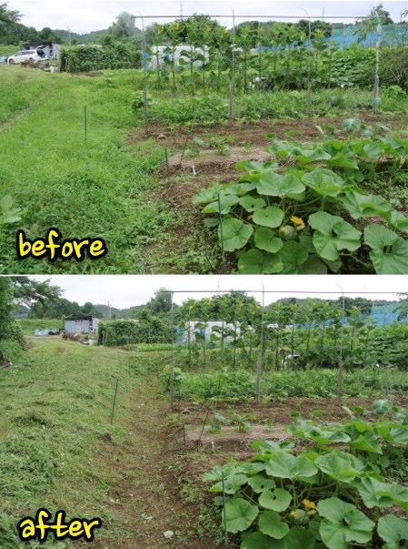 草刈り作業_c0063348_9402255.jpg