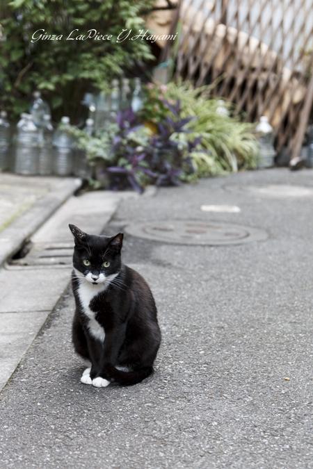猫のいる風景 白黒の上目使い_b0133053_0332123.jpg