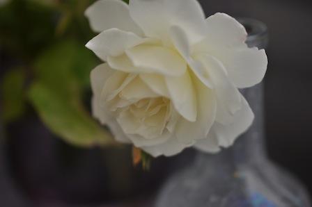 バラとビーチグラス_d0154102_1011749.jpg