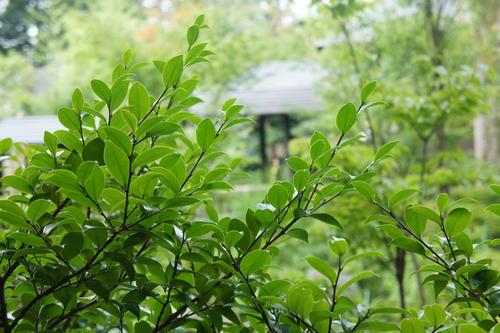 強羅温泉(箱根) 雪月花_f0215714_1753531.jpg