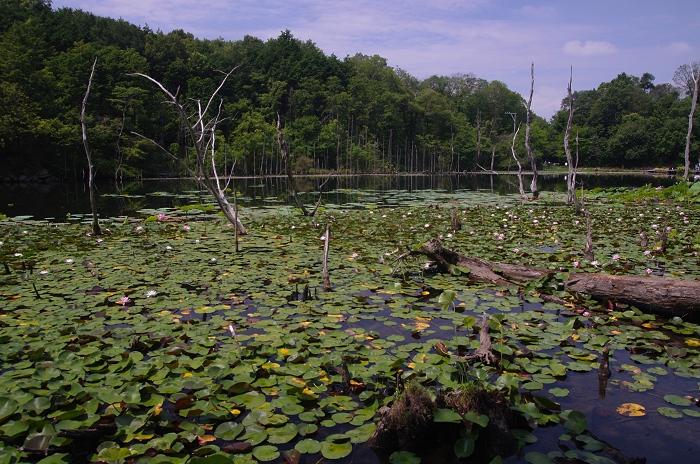 三河の大正池(小呂池)_c0047422_1930169.jpg