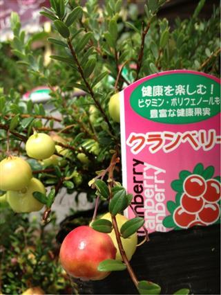 植物入荷。○_c0173939_1055399.jpg