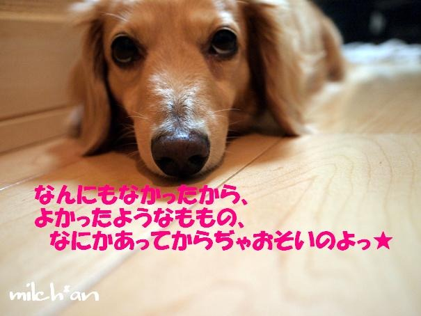 b0115642_2253565.jpg