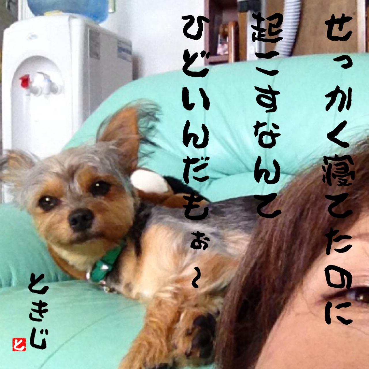 e0309644_16441347.jpg