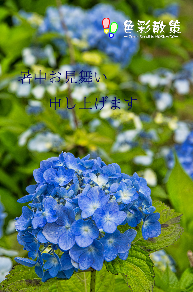 c0199552_1583660.jpg