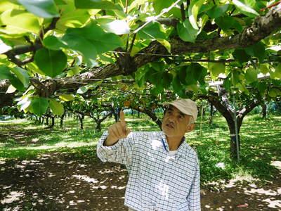 熊本梨 岩永農園 幸水、豊水、新高、新興と出荷していきます!!_a0254656_17581413.jpg
