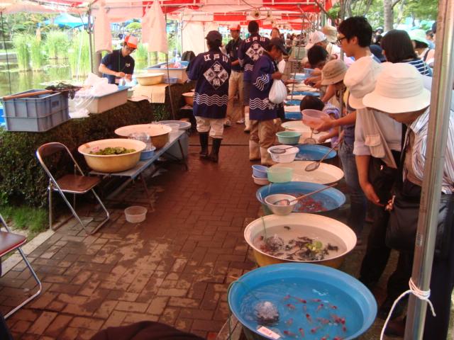 「江戸川区金魚まつり」へ行く。_f0232060_1117217.jpg