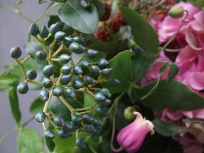 オークリーフ(青木園芸の紫陽花を使って・・)_f0049672_1435129.jpg