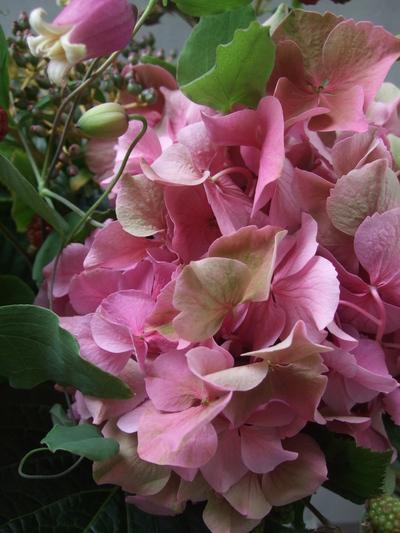オークリーフ(青木園芸の紫陽花を使って・・)_f0049672_14354100.jpg
